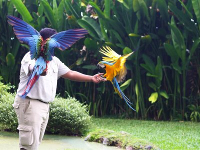 photo Ubud tour and bird park 3