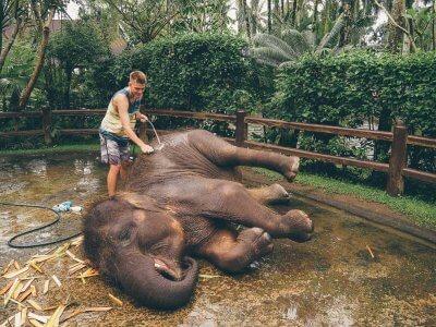 фото Парк слонов на Бали 7