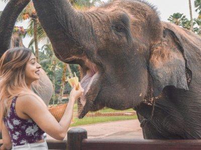 фото Taman Safari di Mason Elephant Park  2