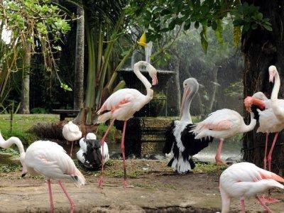 фото Wisata Ubud dan Taman Burung di Bali 2