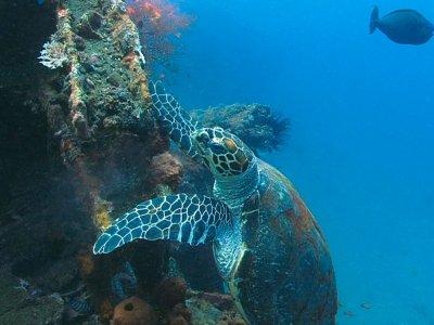 фото Snorkeling di Bali 2